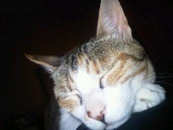 Zibou, ma mini minette adorée, blottie sur moi, toute sereine, bienheureuse