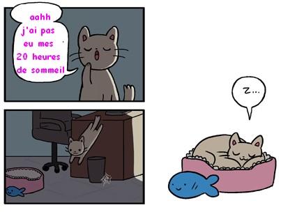 dr cat zz