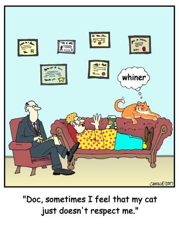 Docteur, parfois j'ai l'impression que le chat ne me respecte pas...