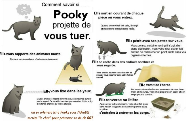pooky chat-tueur
