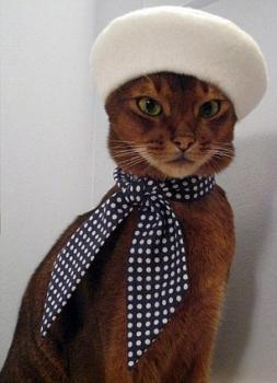 nti Cat Fasion