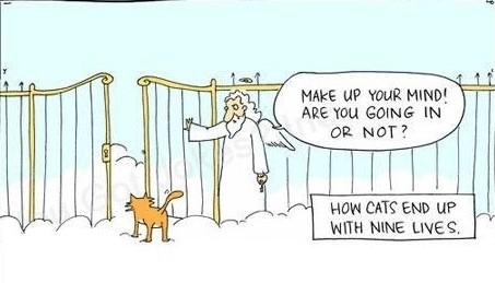 funny-cat-lolcat-nine-lives